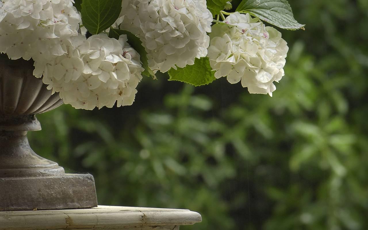 fleurs en camargue